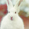 melancholic_beauty: (Bunny!) (Default)