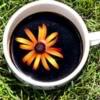 lavvyan: (flowercup)