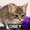 kierthos: (obey)
