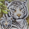 smb814: (Animal White Tigers.)