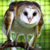 aries_ascendant: (owl)