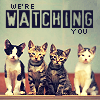 fiveforsilver: (Cats [We're watching you!])