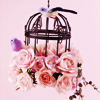 rosewine: (flower: rose and birdcage)
