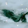 xpaperplanex: (Seph wing)