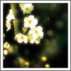 paisleylongbottom: (Flowers)