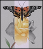 branchandroot: butterfly on a rose (butterfly rose)