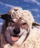 shadesofvirtue: Wolf in sheep clothing (pic#6135080)