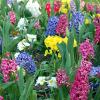 rabbitrabbitrabbit: (the garden)