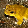 strangehistorian: ([yarr] frog)