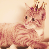calimera: (crowned cat)