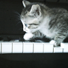 next_to_normal: (piano kitty)
