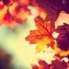 juniperphoenix: Autumn leaves (Fall)
