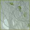 branchandroot: falling leaves against branches and moon (tree moon leaves)