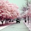 scarlette_wilde: (Pink Avenue)