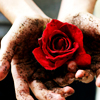 lar_laughs: (Dirty Rose)