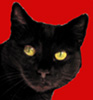 kokopelle: Black Cat (Cat - Black)