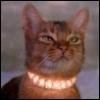 zunarjayfive: (glowing collar)
