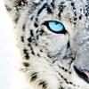 pureimagination: (tiger)