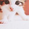 seisatsu: (Curious Kitty)