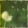 branchandroot: blowing dandelion (dandelion blowing)