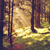 quirkyandquiet: (stock ; forest)