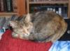 pandop: (sophiecat1)