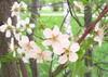betulina: (розовое) (Default)