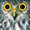 magicalmartha: (Owl eyes)