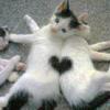 eaemilia: (heartcats)