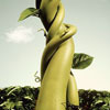storiwr: (English Beanstalk)