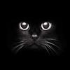cloris: (Felino)