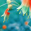 mariliisa: (flower)