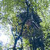robin_arede: A treehouse  (Treehouse)