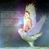 akikotree: (owl)