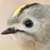 mirroredvalue: (I'm a bird!)