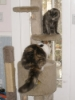 anne_d: (Cat tree)