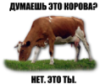 rusik78: (cow)