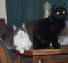 teshara: (cats)