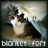 medley: (blanket fort)