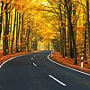 draconis: (autumn road)