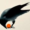 ravenmaw: (very30)