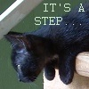 "corrvin: black kitten on a stairstep, text ""it's a step"" (step)"