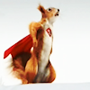 mad_jaks: Squirrel in a cape (Super Murray)