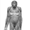 halialkers: Ardipethicus ramidus, frontal view. Ape on hind legs, left arm extending out from body (Vatin)