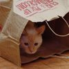kayre: cat peeking out of a paper bag (felix in bag)