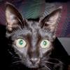 jdotmi: (William, Kitty William)