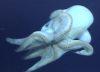 kylinn: (tentacles!, tentacles)