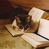 ignotussomnium: A cat lying on an open book. ([Cat] My favorite things)