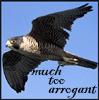 muchtooarrogant: (Peregrine)