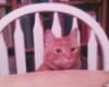 quoththeravyn: cat peeking over the edge of the dinner table (kittykitty)